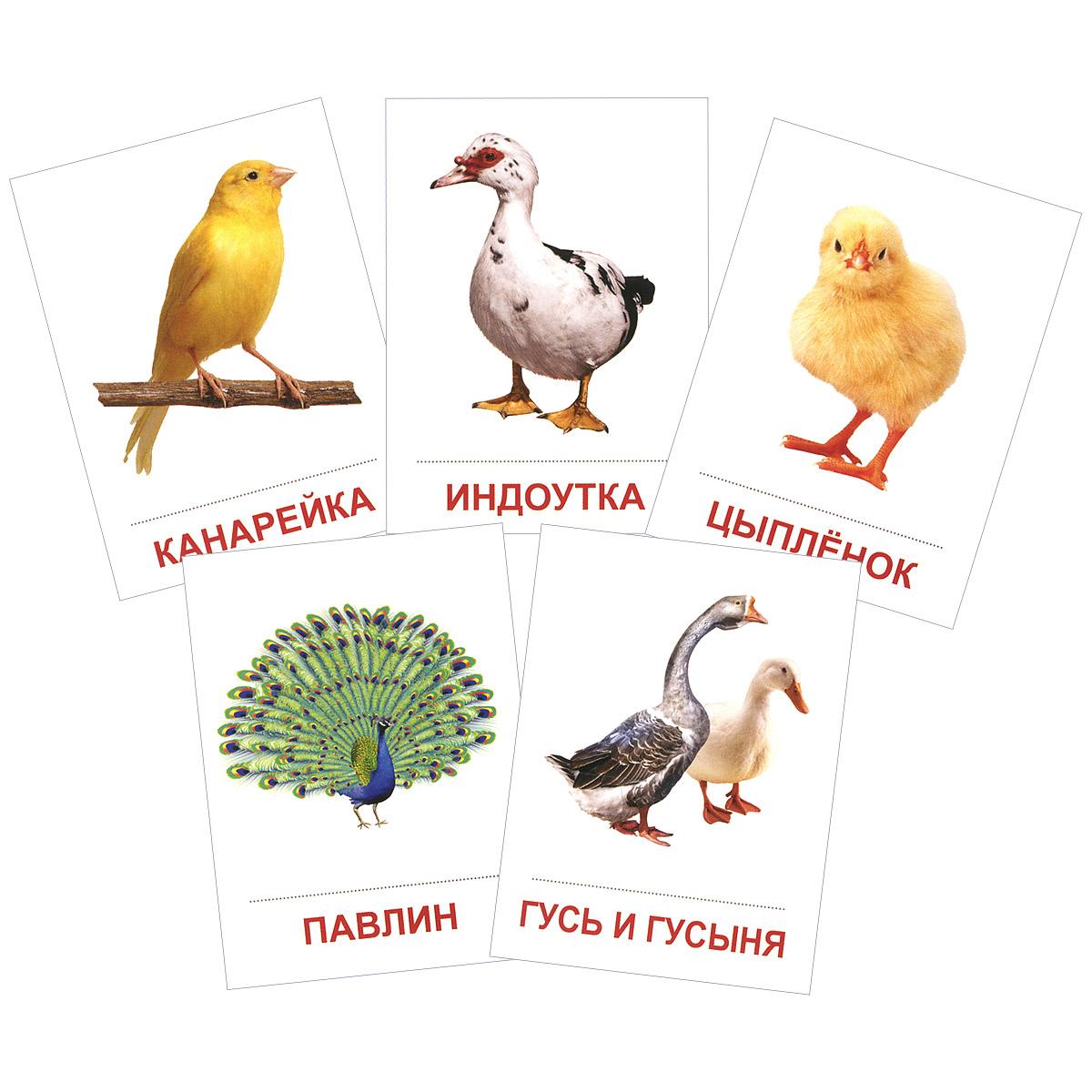 Птицы домашние и декоративные (набор из 16 карточек)
