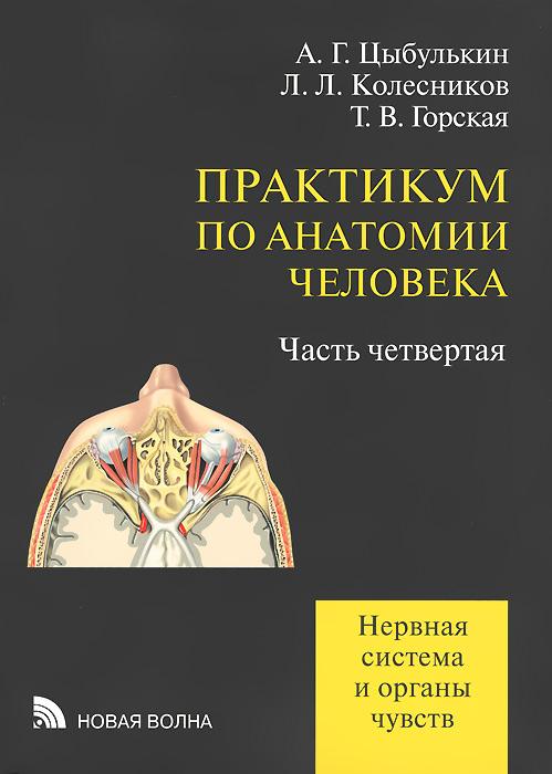 Практикум по анатомии человека. Нервная система и органы чувств. Учебное пособие. В 4 частях. Часть 4