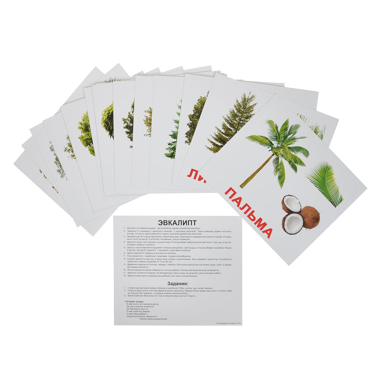 Вундеркинд с пеленок Обучающие карточки Деревья наборы карточек вундеркинд с пеленок набор обучающих карточек мини 40 nature природа