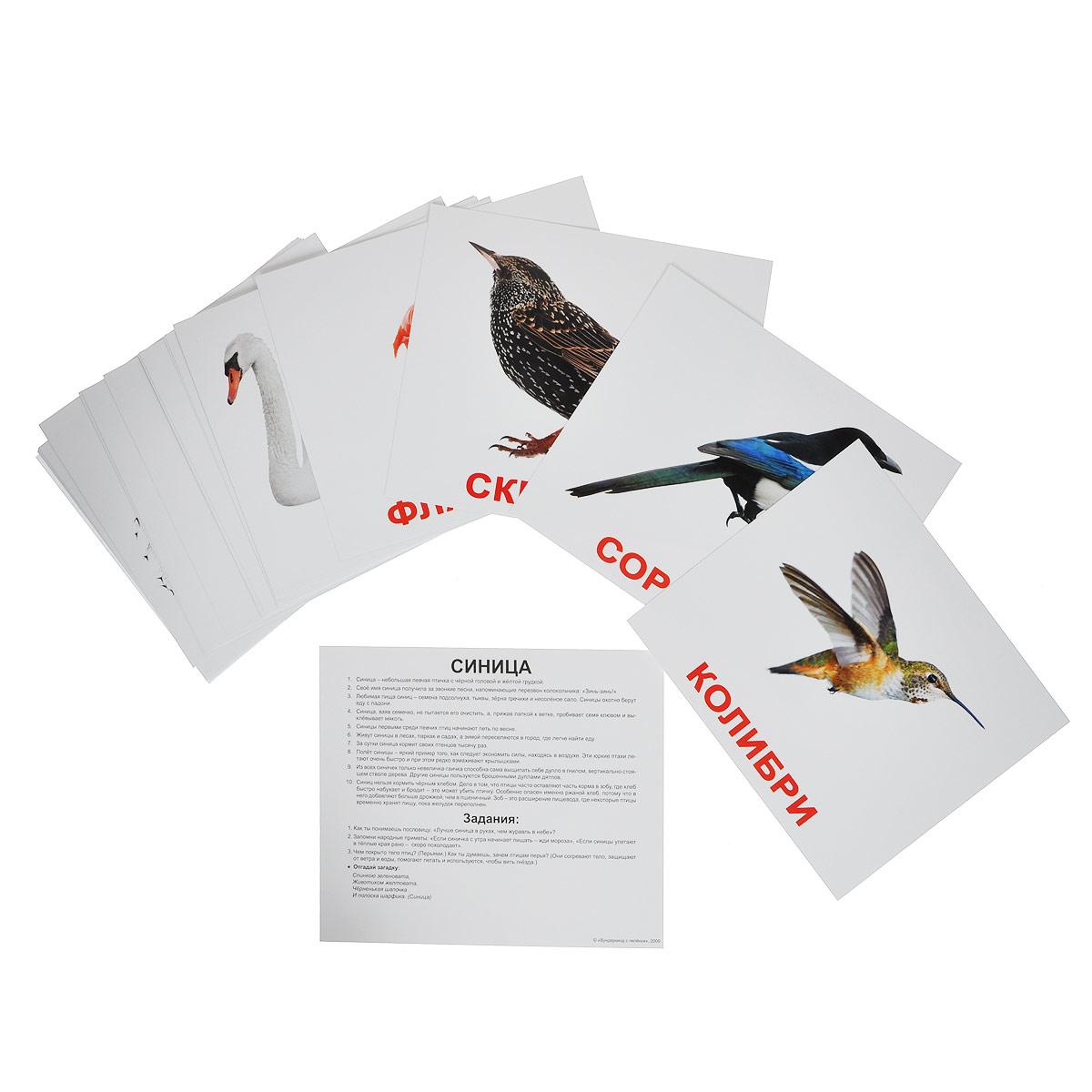 Вундеркинд с пеленок Обучающие карточки Птицы набор обучающих карточек вундеркинд с пеленок выдающиеся личности