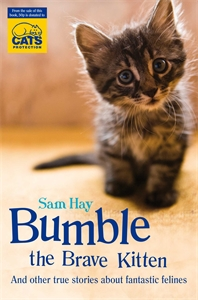 Bumble the Brave Kitten brave soul
