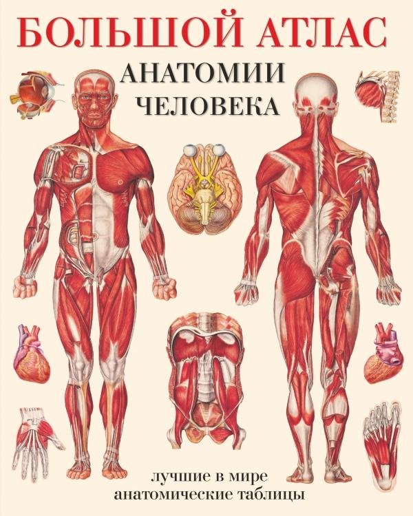 Махиянова Е.Б. Большой атлас анатомии человека. Системы и органы большой атлас анатомии человека