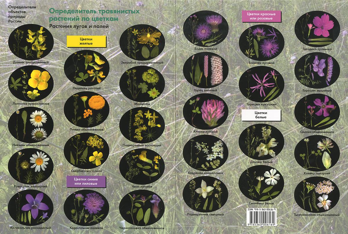 Определитель травянистых растений по цветкам. Растения лугов и полей