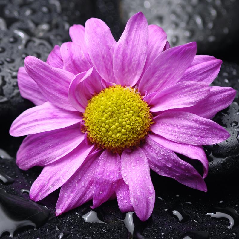 Картина на стекле Postermarket Розовый цветок, 30 см х 30 смAG 30-03Картина на стекле Postermarket - это новое слово в оформлении интерьера. Изделие выполнено из закаленного стекла, что обеспечивает устойчивость к внешним воздействиям, защиту от влаги и долговечность. Картина оформлена красочным изображением розового цветка. С задней стороны имеется петелька для подвешивания к стене. Стильный, современный дизайн, а также яркие и насыщенные цвета сделают эту картину прекрасным дополнением интерьера комнаты.