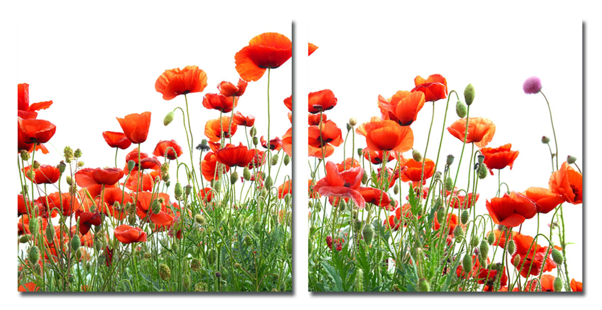 Канвас диптих Idea Красные цветы, 100 см х 50 см, 2 штIDEA FL2-08Канвас - это ткань (полиэстер) с художественной фотопечатью, натянутая на деревянный каркас. Диптих включает два элемента, которые образуют единый рисунок. Такое изделие - оригинальный декоративный элемент, способный преобразить любой интерьер. Картина оформлена красочным изображением красных цветов. С задней стороны имеются петельки для подвешивания к стене. Элементы следует размещать на стене, оставляя между ними небольшой промежуток.Стильный, современный дизайн, а также яркие и насыщенные цвета сделают эту картину прекрасным дополнением интерьера комнаты.Размер одного элемента: 50 см х 50 см. Общий размер диптиха: 100 см х 50 см.
