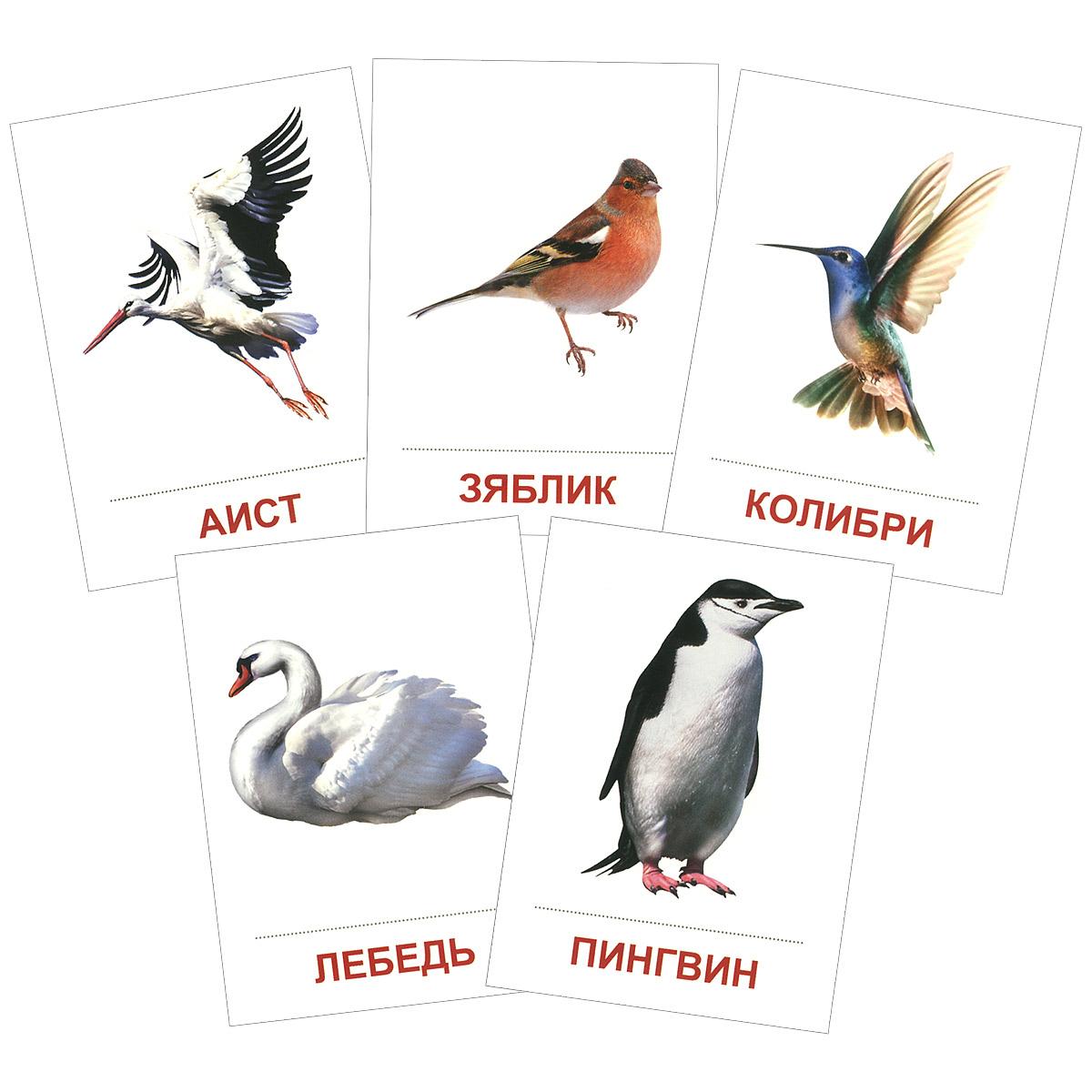 Птицы разных широт (набор из 16 карточек)