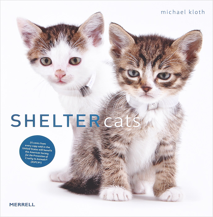 Shelter Cats stick cat cats in the city