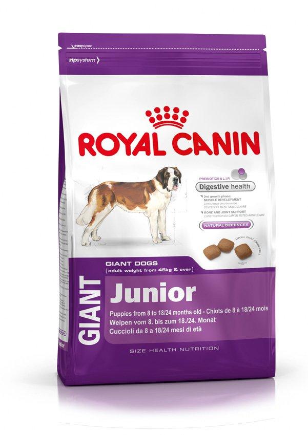 Корм сухой Royal Canin Giant Junior, для щенков собак очень крупных размеров, 4 кг197040Корм сухой Royal Canin Giant Junior - полнорационный сухой корм для щенков собак очень крупных размеров (вес взрослой собаки более 45 кг) в возрасте с 8 до 18/24 месяцев. Максимальная пищевая переносимость.Формула с содержанием высококачественных белков L.I.P, а также пребиотиков - фруктоолигосахаридов и маннановых олигосахаридов оказывает благоприятное воздействие на пищеварительную систему и поддерживает оптимальную консистенцию стула. Вторая фаза роста: развитие мышечной массы.Оптимальное количество белка и L-карнитина обеспечивают набор мышечной массы щенков собак очень крупных размеров во второй фазе роста (с 8 месяцев). Здоровье костей и суставов.Формула с оптимальным уровнем энергии и минералов (кальция и фосфора) способствует поддержанию костей и суставов щенков собак очень крупных размеров в период роста.Естественные механизмы защиты.Способствует поддержанию естественных защитных сил организма щенка благодаря запатентованному комплексу антиоксидантов и манноолигосахаридов. Состав: дегидратированные белки животного происхождения (птица), рис, кукуруза, животные жиры, изолят растительных белков, гидролизат белков животного происхождения, свекольный жом, минеральные вещества, рыбий жир, соевое масло, дрожжи, оболочка и семена подорожника, фруктоолигосахариды, гидролизат дрожжей (источник мaннановых олигосахаридов), гидролизат из панциря ракообразных (источник глюкозамина), экстракт бархатцев прямостоячих (источник лютеина), гидролизат из хряща (источник хондроитина). Добавки (в 1 кг): Витамин A: 17100 ME, Витамин D3: 1100 ME, Железо: 52 мг, Йод: 5,2 мг, Марганец: 68 мг, Цинк: 203 мг, Ceлeн: 0,1 мг, L-карнитин: 300 мг.Содержание питательных веществ: Белки: 31%, жиры: 16%, минеральные вещества: 8%, клетчатка пищевая: 1,3%. Медь: 15 мг/кг.Товар сертифицирован.