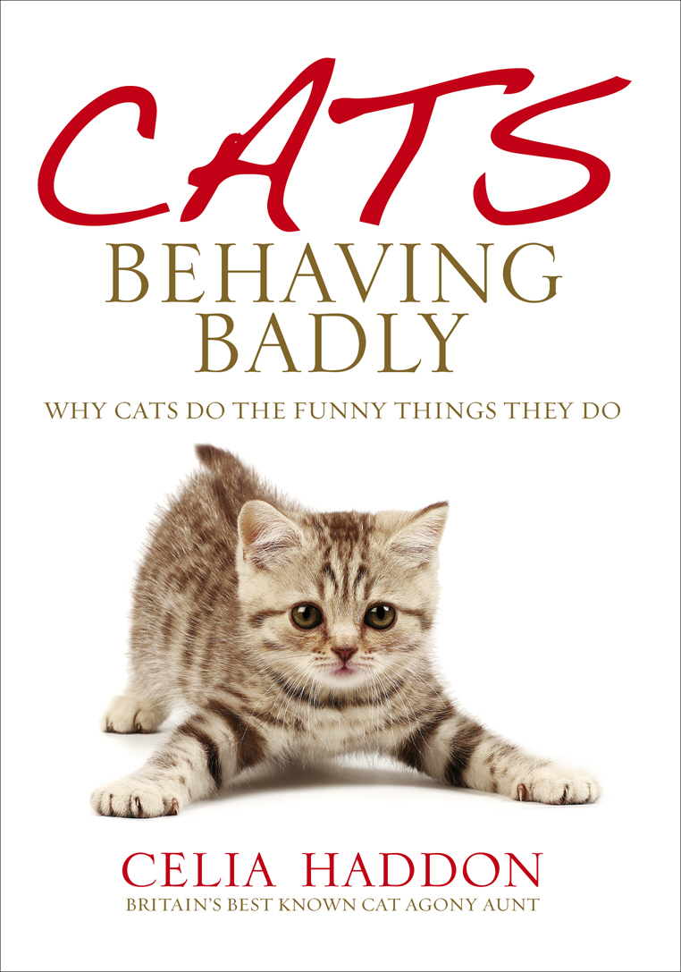 Cats Behaving Badly yum 2 wooly curltail