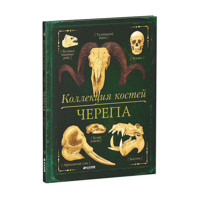 Камилла де ла Бедуайер Коллекция костей. Черепа коллекция костей черепа бедуайер де ла к clever