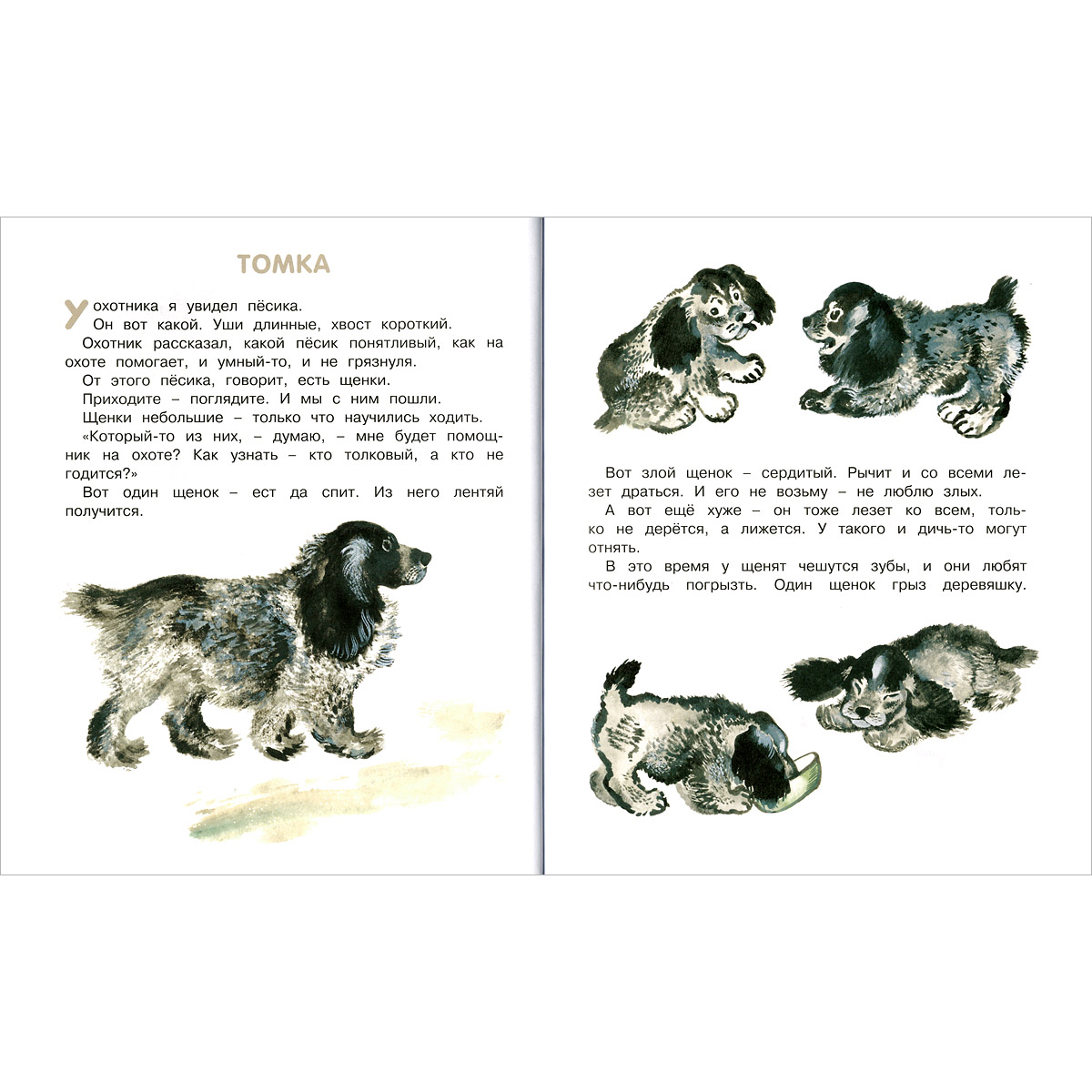 распечатать рассказы о животных картинки вам нужен