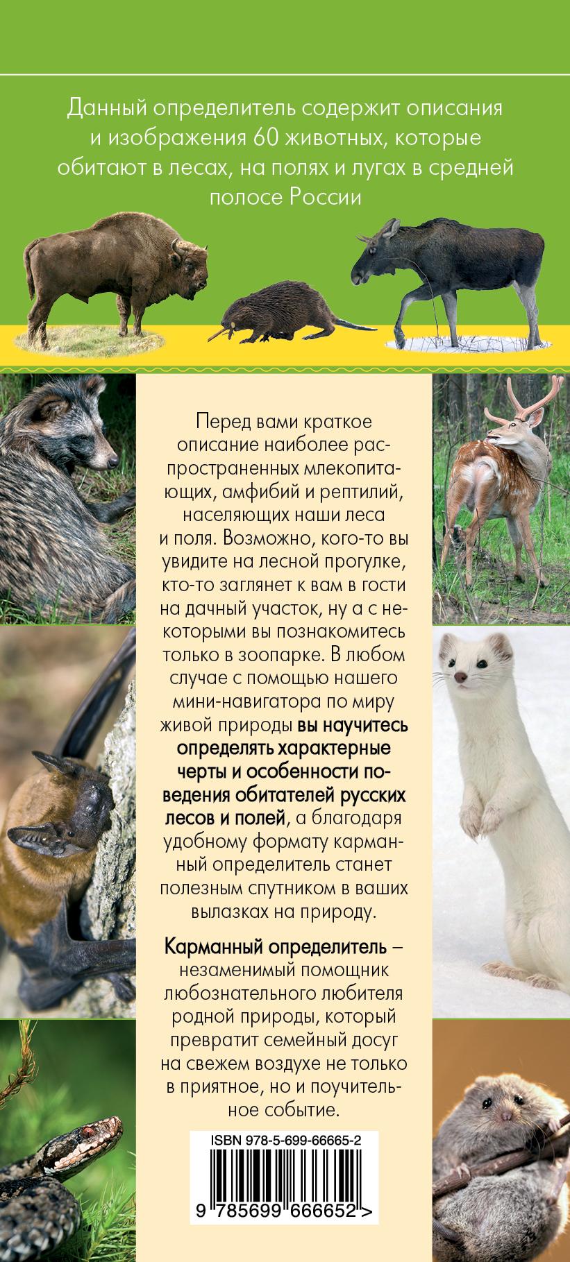 Животные. Определитель животных русских лесов и полей случается эмоционально удовлетворяя