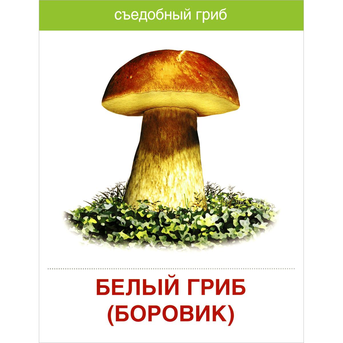 Надписями, картинки съедобных грибов с надписями