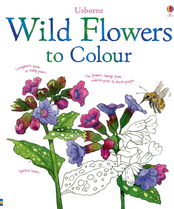 Wild Flowers to Colour wild flowers