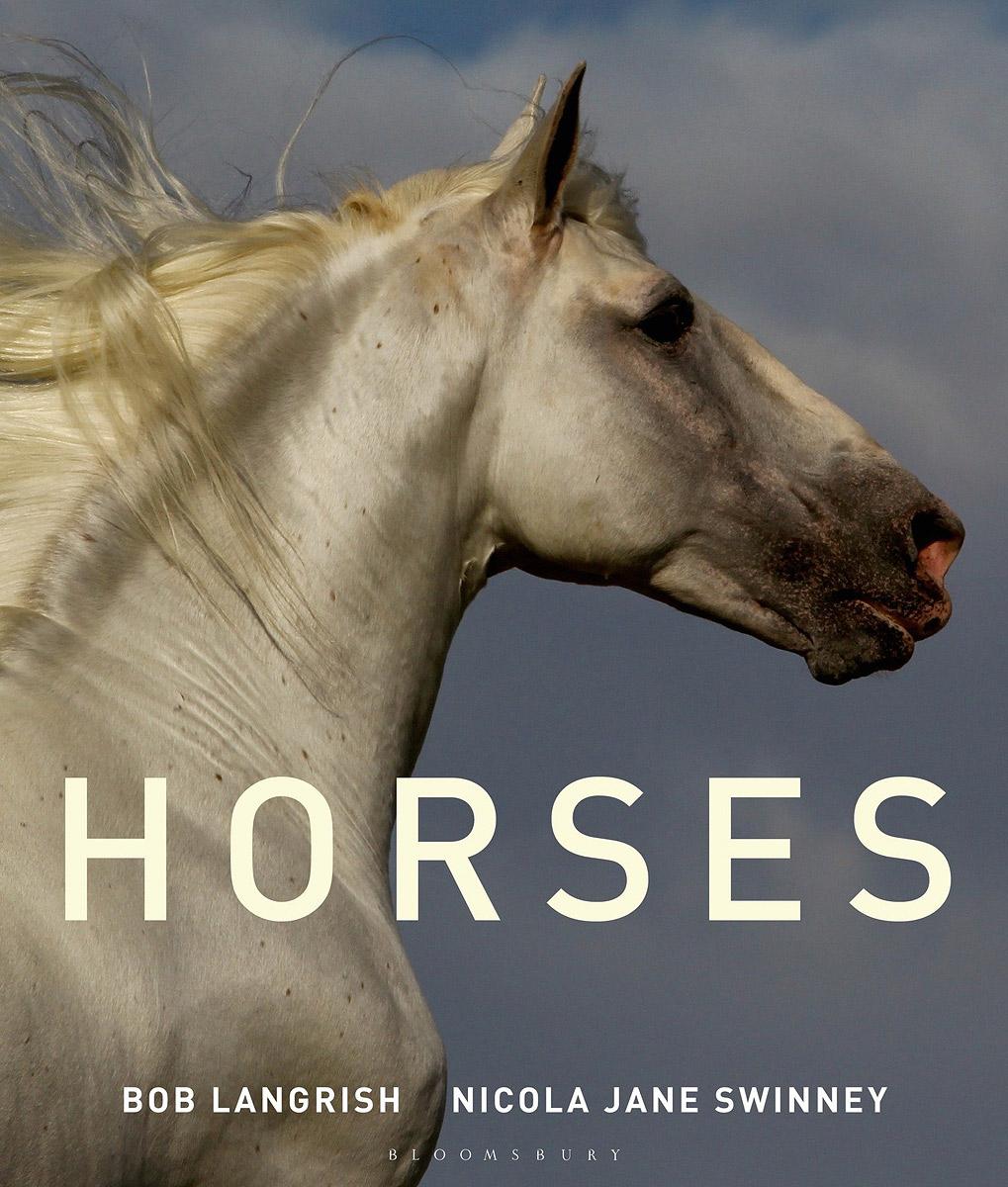 Horses genetics of coat colour in horses
