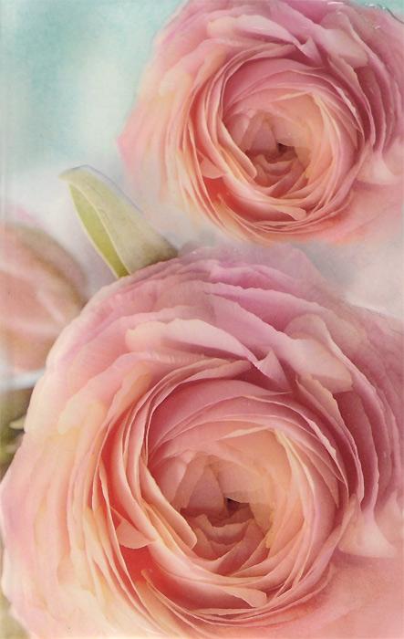 Блокнот. Розы jd коллекция книга в твердом переплете a чашка суб мыло цветочные ящики благородный фиолетовый дефолт