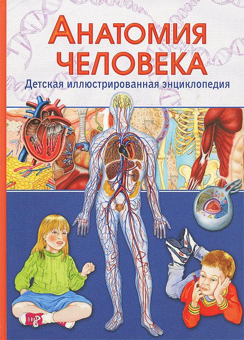 В. Гуиди Анатомия человека. Детская иллюстрированная энциклопедия