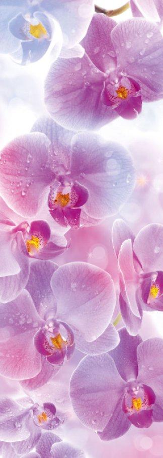 Фотообои Твоя Планета Premium. Поэма цвета: Орхидеи, 4 листа, 97 х 272 см4607161056875Основа фотообоев Твоя Планета Premium. Поэма цвета: Орхидеи - импортная бумага высокого качества и повышенной плотности с нанесенным на неё цветным фотоизображением. Технология сборки фрагментов в единую картину довольно проста. Это наиболее распространенный вид обоев, позволяющих создать в квартире (комнате) определенное настроение и даже несколько расширить оптический объем. Фотообои пользуются популярностью потому, что они недорогие и при этом позволяют получить массу удовольствий при созерцании изображения.Количество листов: 4. Размер (ШхВ): 97 см х 272 см.