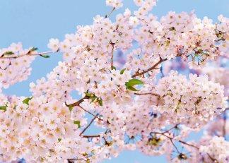 Фотообои Твоя Планета Премиум Весна 272 х 194 см, 8 листов