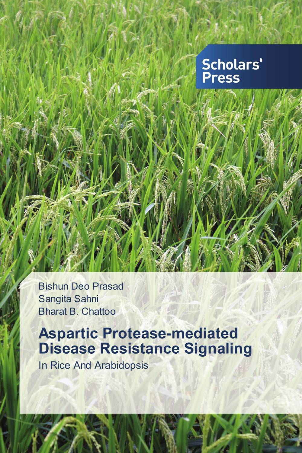 Aspartic Protease-mediated Disease Resistance Signaling improved expression of bacterial chia in plant by codon optimisation