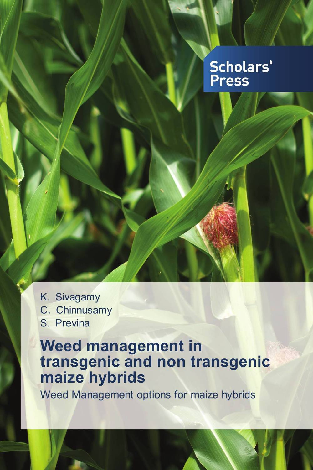 Weed management in transgenic and non transgenic maize hybrids weed management in rice wheat system