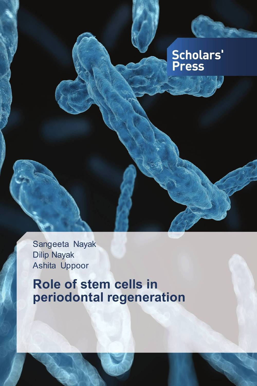 Role of stem cells in periodontal regeneration the role of dna damage and repair in cell aging 4