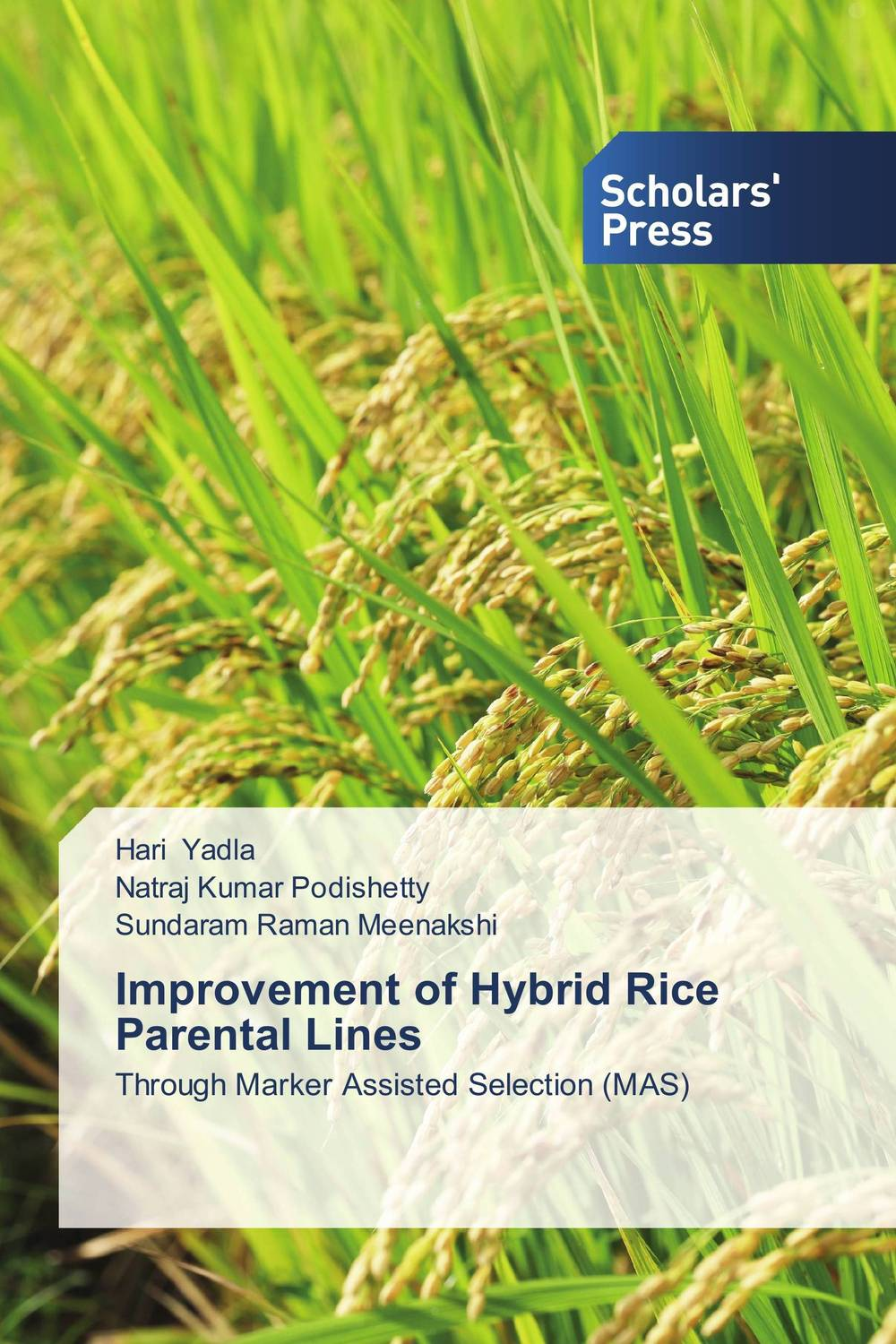 Improvement of Hybrid Rice Parental Lines sanjeev kumar kiran pathania and pawan kumar sharma breeding of rice oryza sativa l