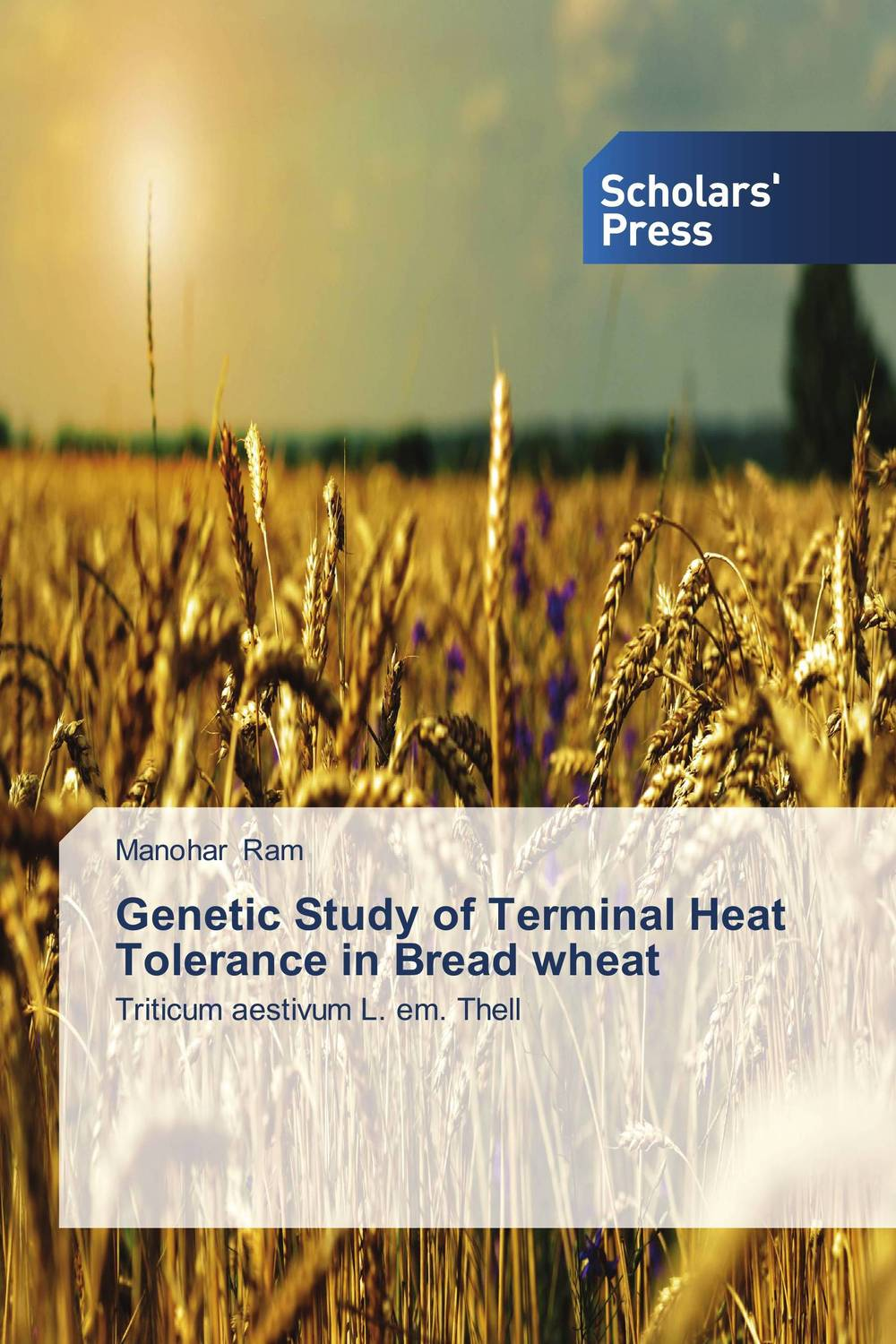 Genetic Study of Terminal Heat Tolerance in Bread wheat