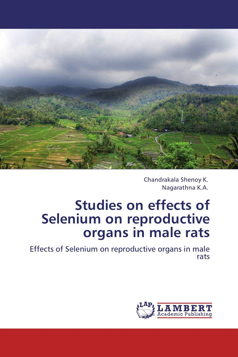Studies on effects of Selenium on reproductive organs in male rats male genital organs male genitalia anatomical model structure male reproductive organs decomposition model
