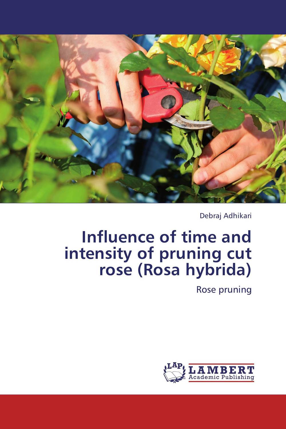 Influence of time and intensity of pruning cut rose (Rosa hybrida)