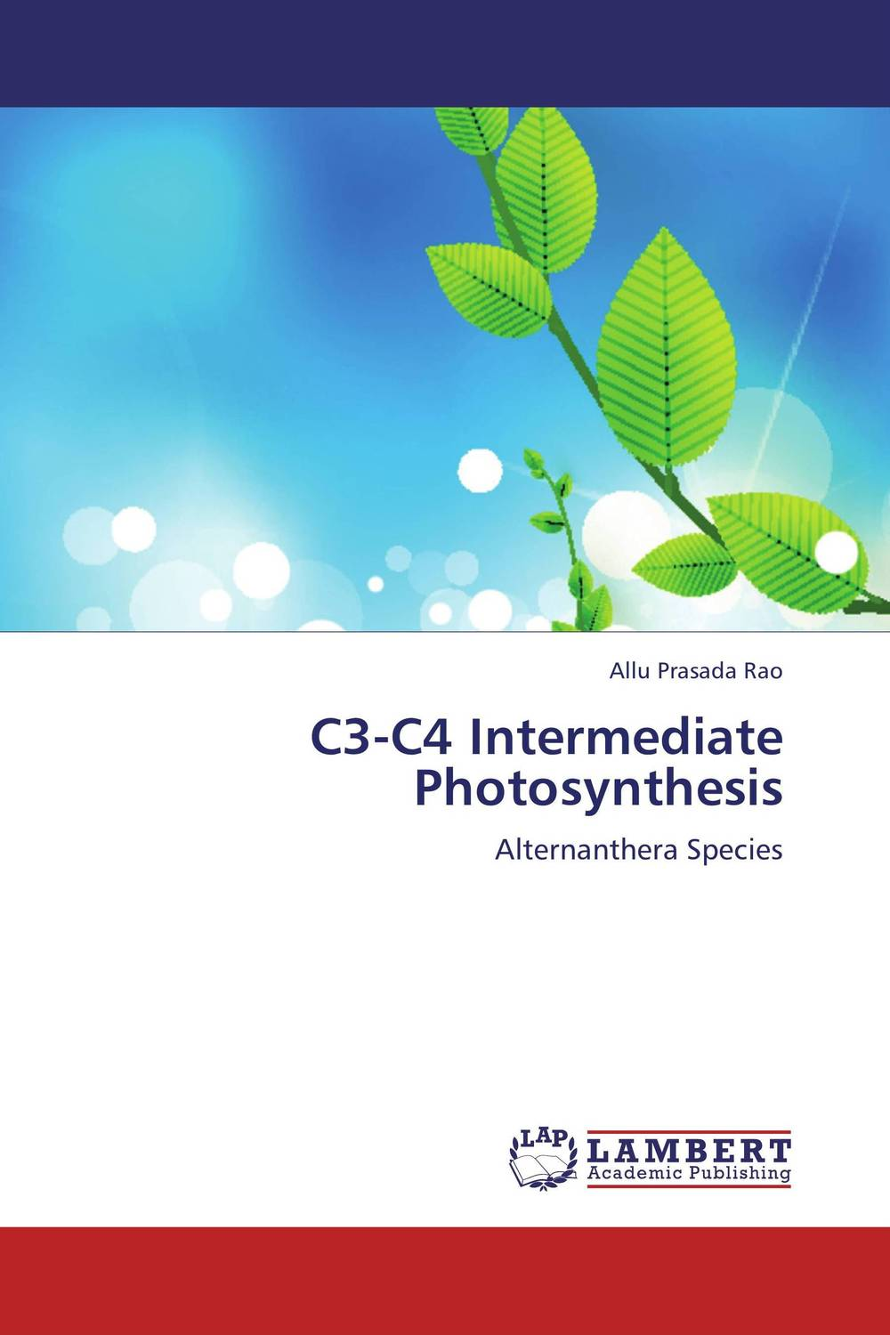 C3-C4 Intermediate Photosynthesis merries трусики подгузники xl12 22кг n38