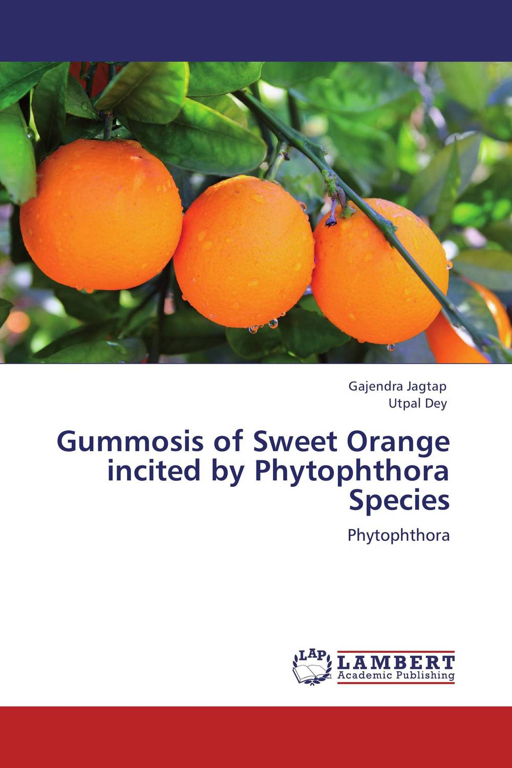 Gummosis of Sweet Orange incited by Phytophthora Species found in brooklyn