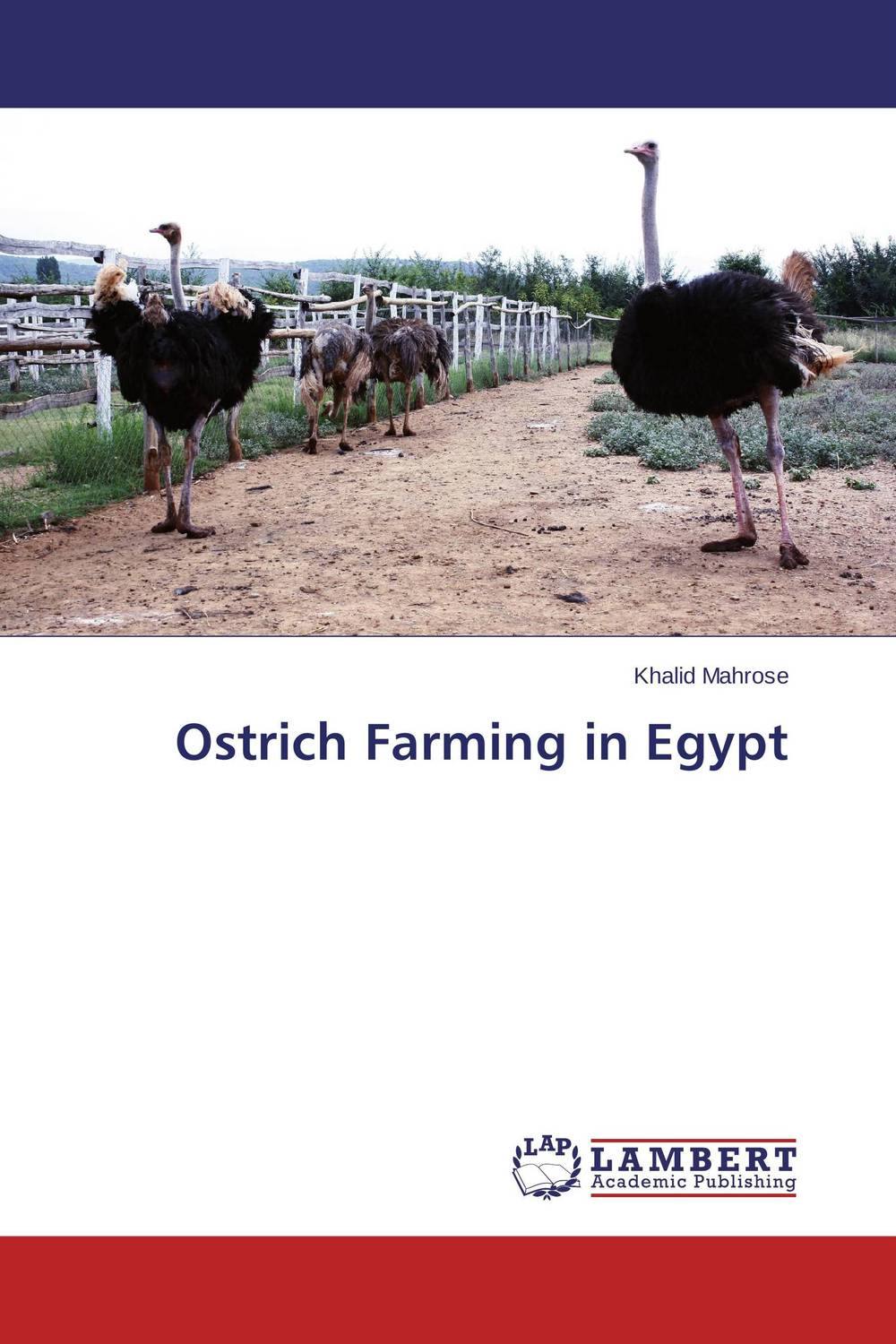 Ostrich Farming in Egypt precision farming in egypt