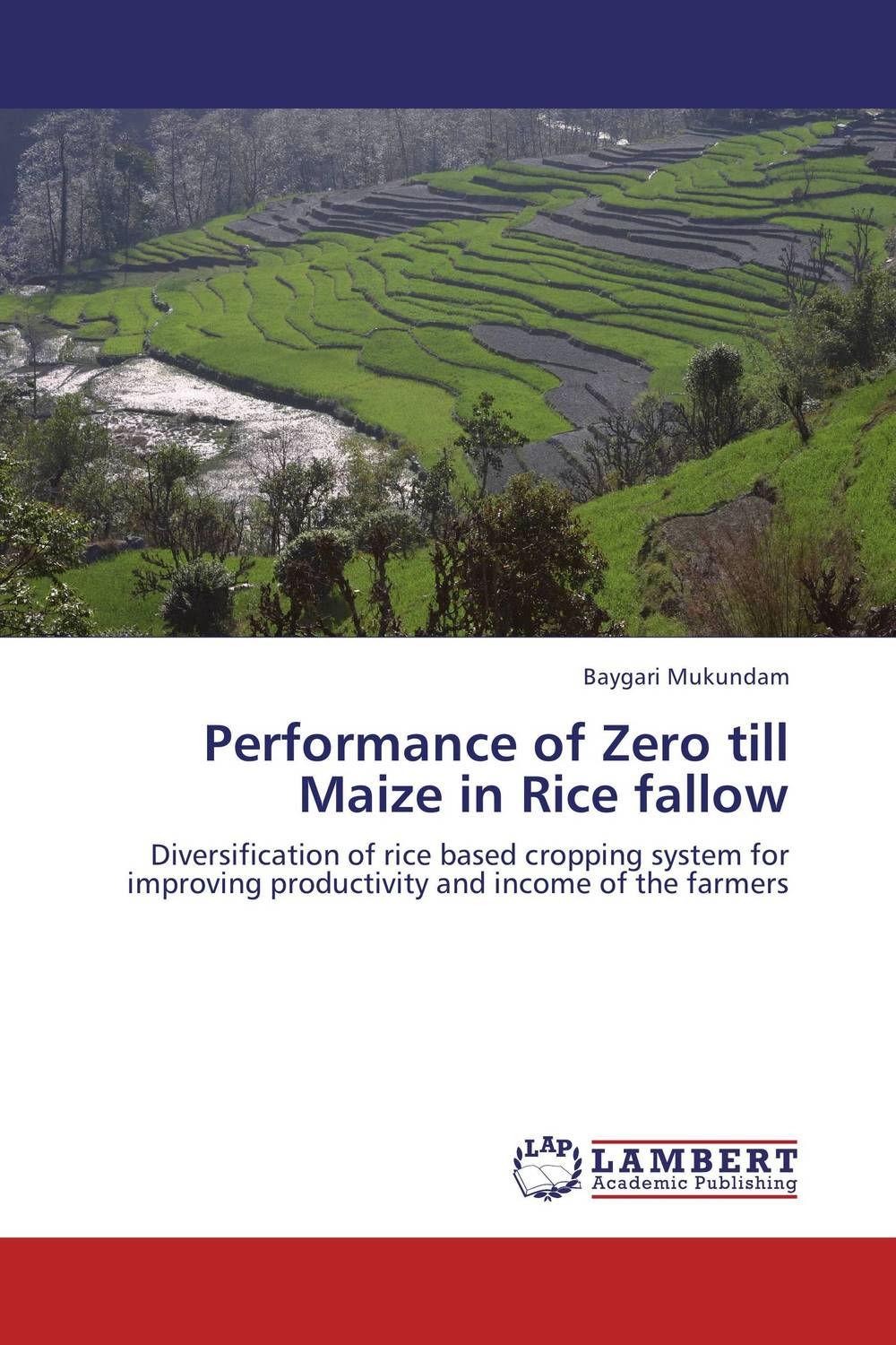 Performance of Zero till Maize in Rice fallow afghanistan 1 1 000 000