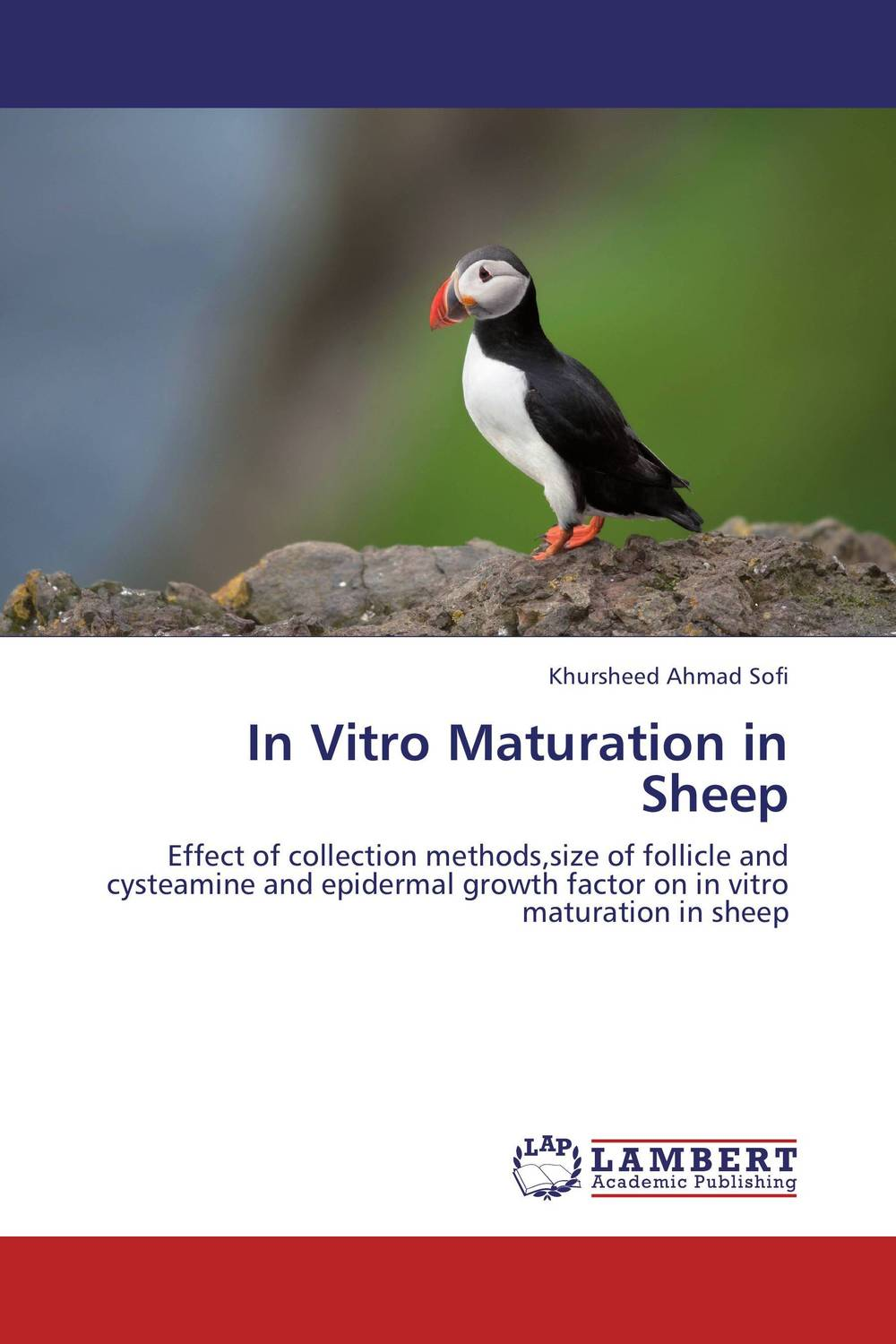 In Vitro Maturation in Sheep influence of culture medium on sheep oocyte maturation to cleavage