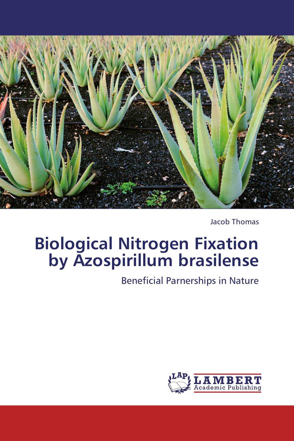 Biological Nitrogen Fixation by Azospirillum brasilense plant mineral nutrition