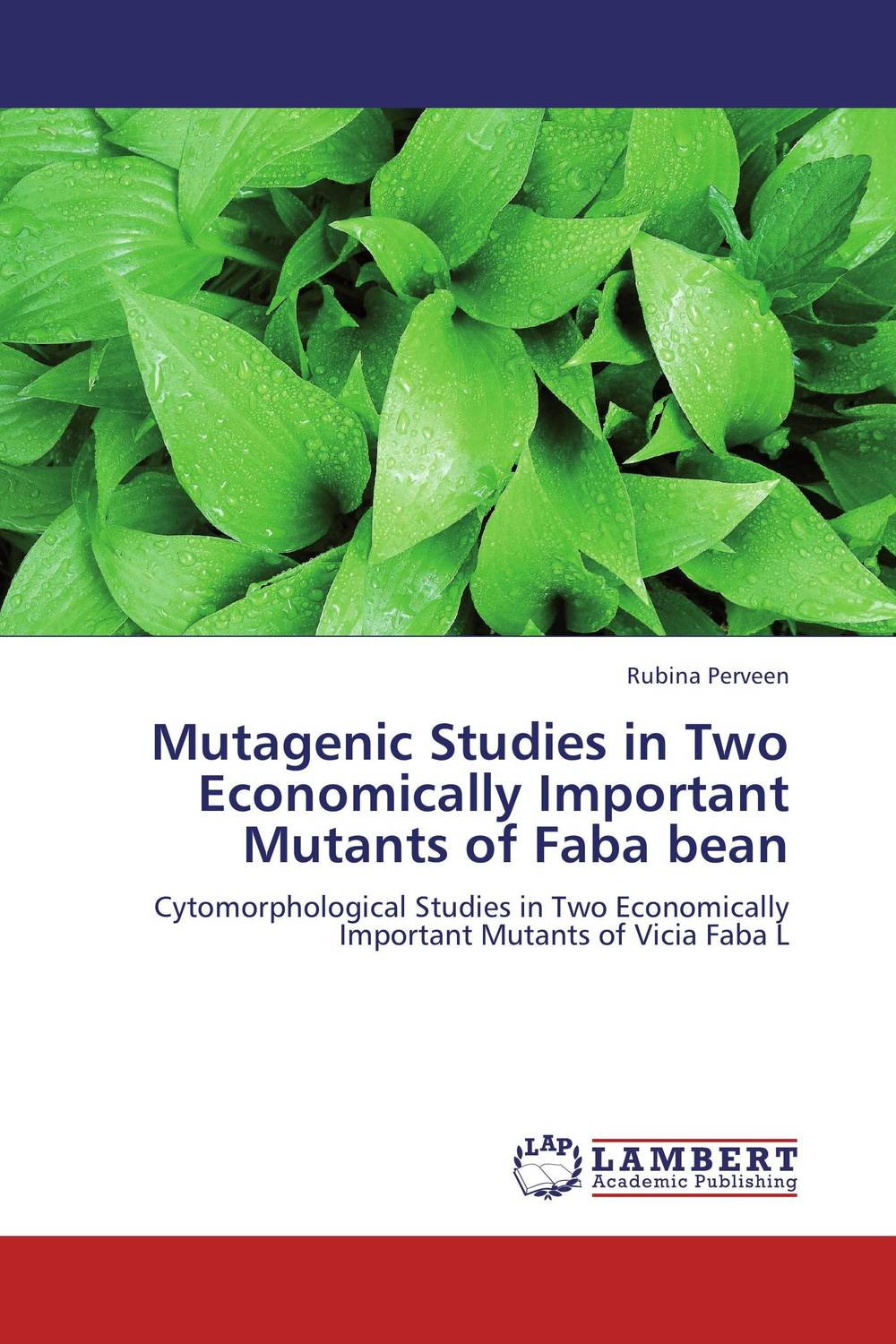 Mutagenic Studies in Two Economically Important Mutants of Faba bean seed dormancy and germination