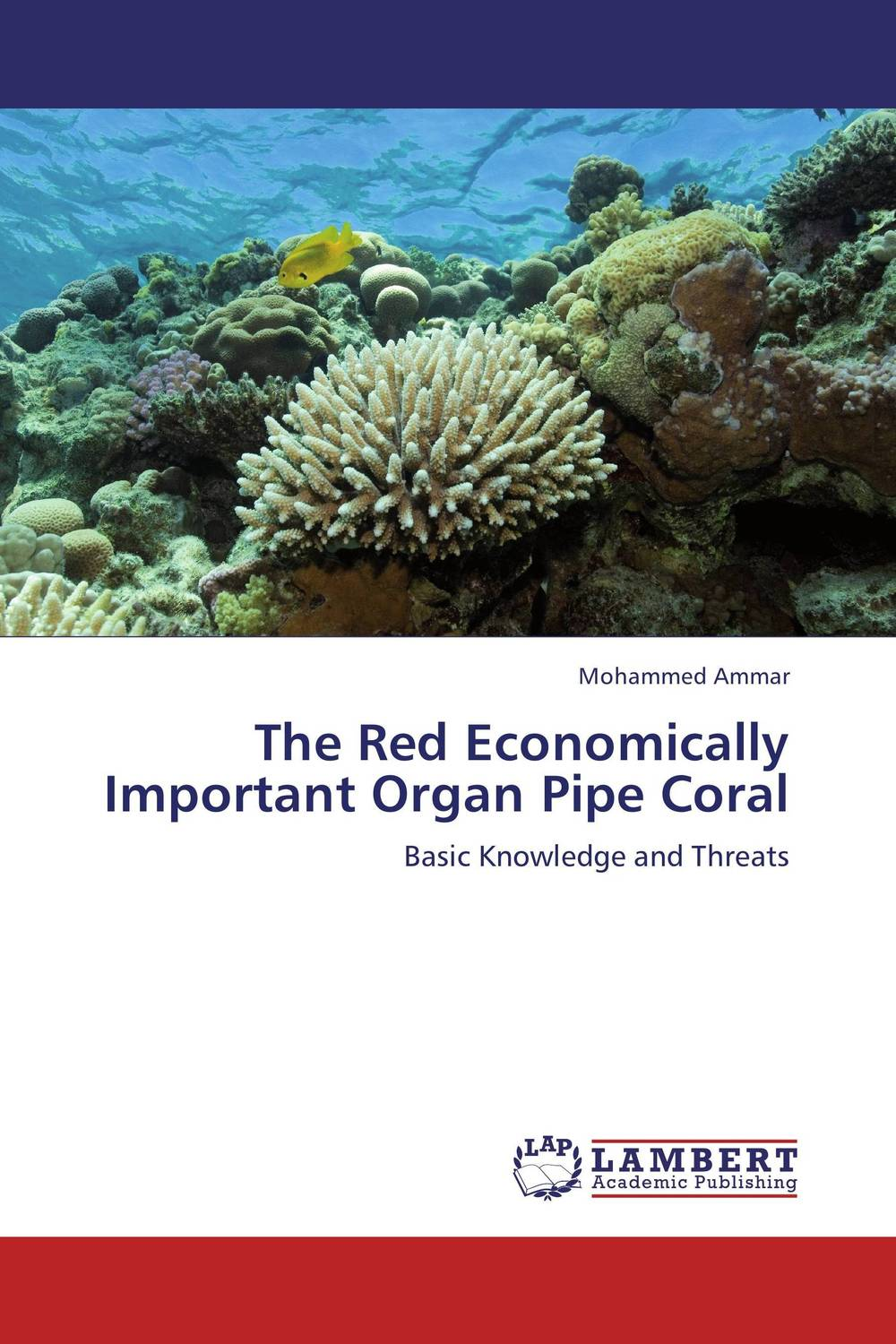 The Red Economically Important Organ Pipe Coral coral health and disease in the red sea egypt