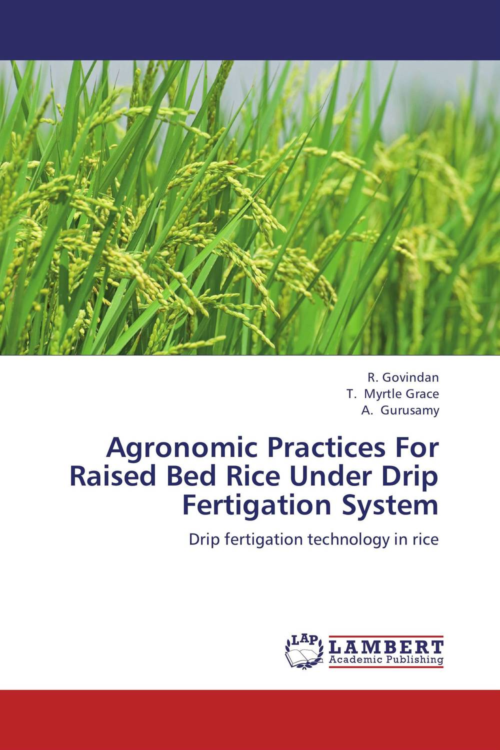 Agronomic Practices For Raised Bed Rice Under Drip Fertigation System natural enemy fauna in rice wheat system of india
