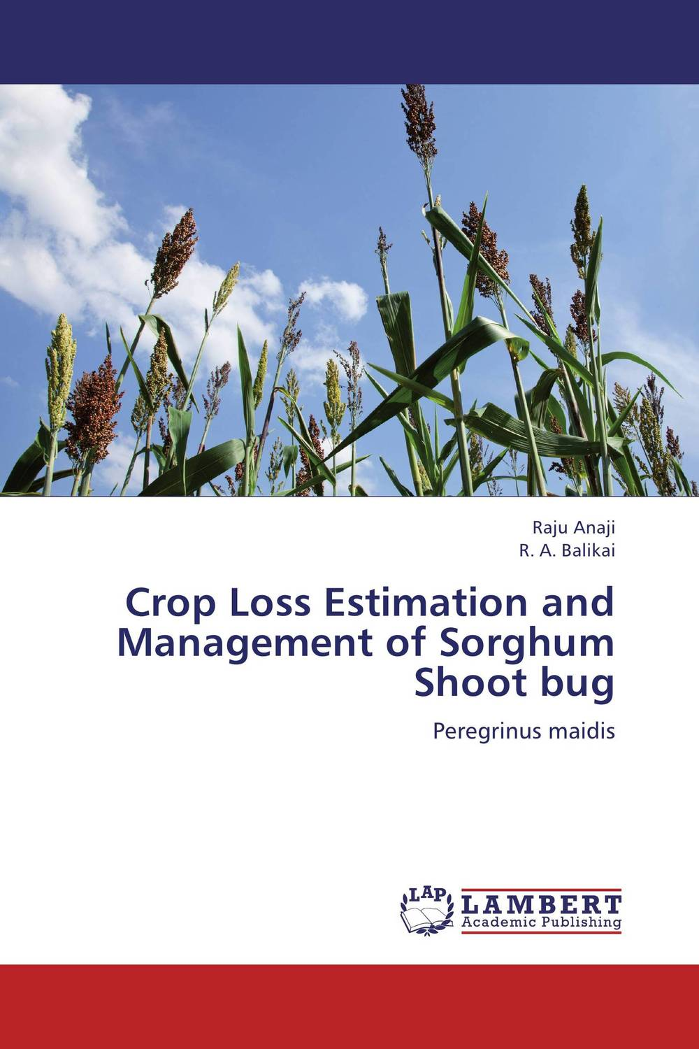 Crop Loss Estimation and Management of Sorghum Shoot bug against the grain