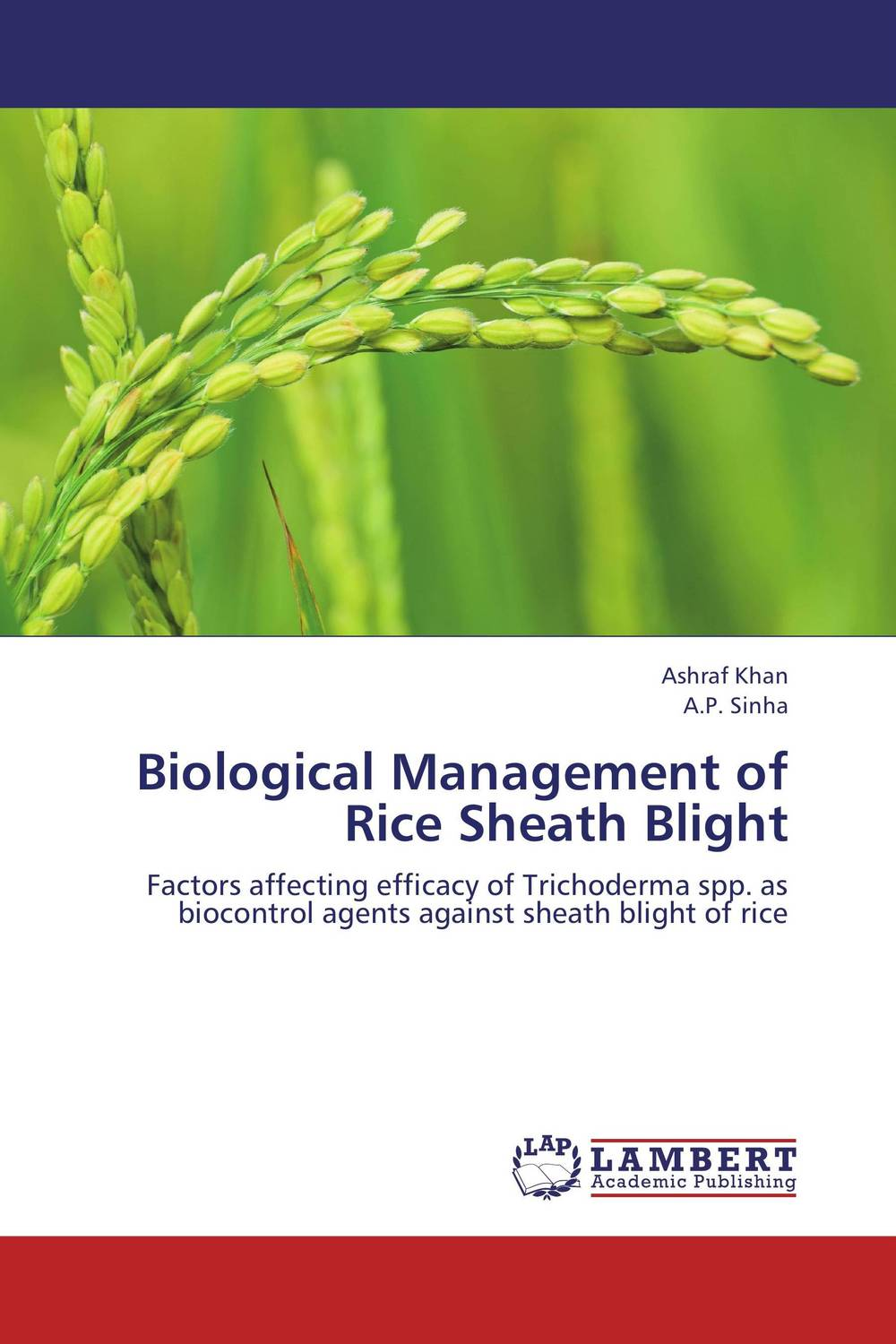 Biological Management of Rice Sheath Blight k r k naidu a v ramana and r veeraraghavaiah common vetch management in rice fallow blackgram