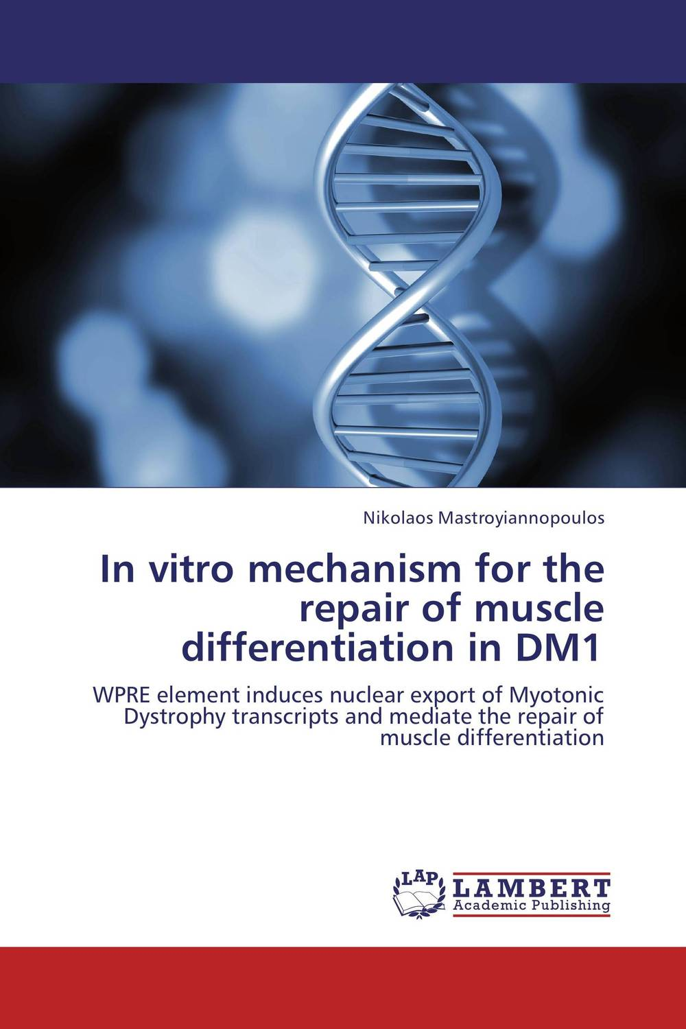 In vitro mechanism for the repair of muscle differentiation in DM1