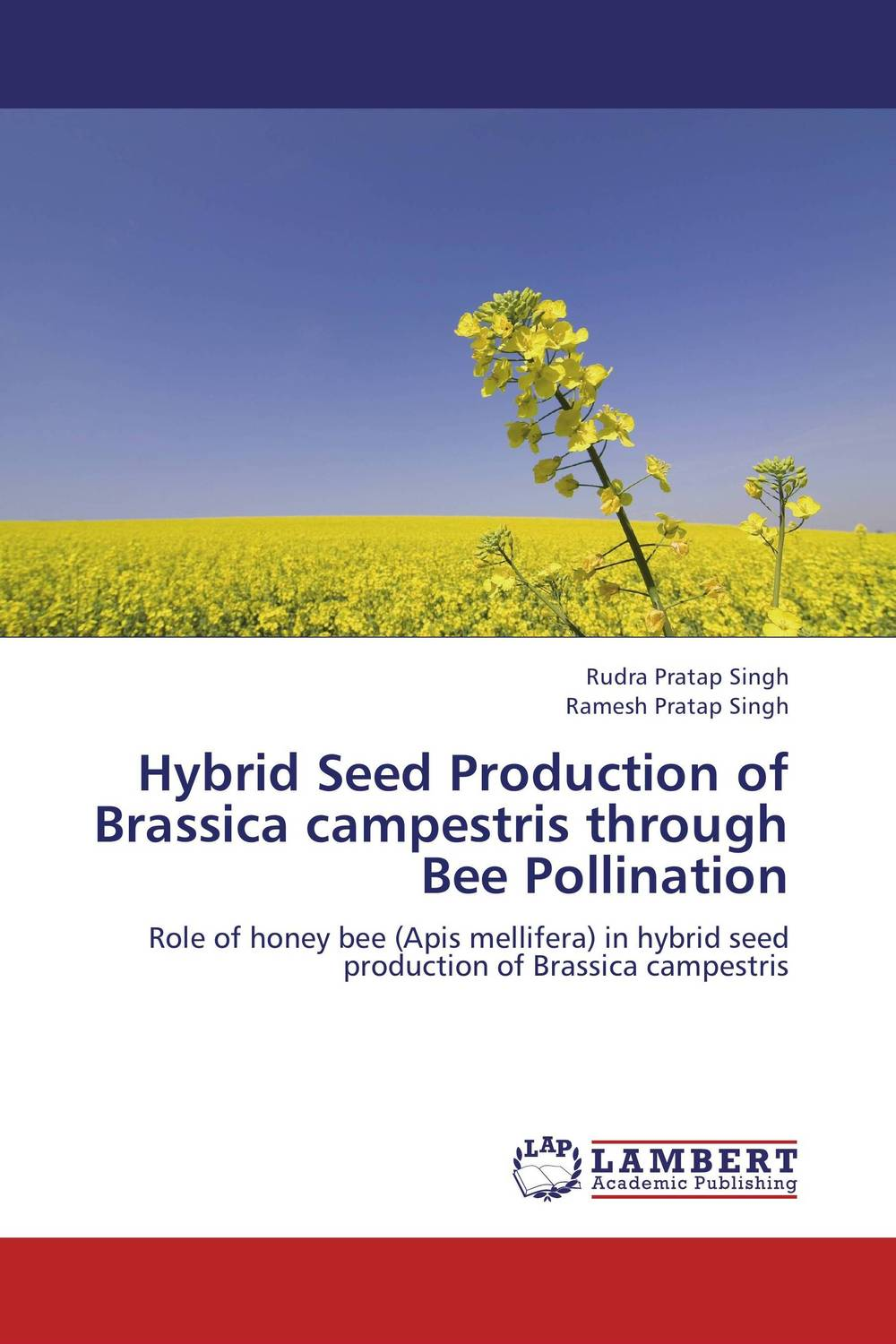 Hybrid Seed Production of Brassica campestris through Bee Pollination seed dormancy and germination