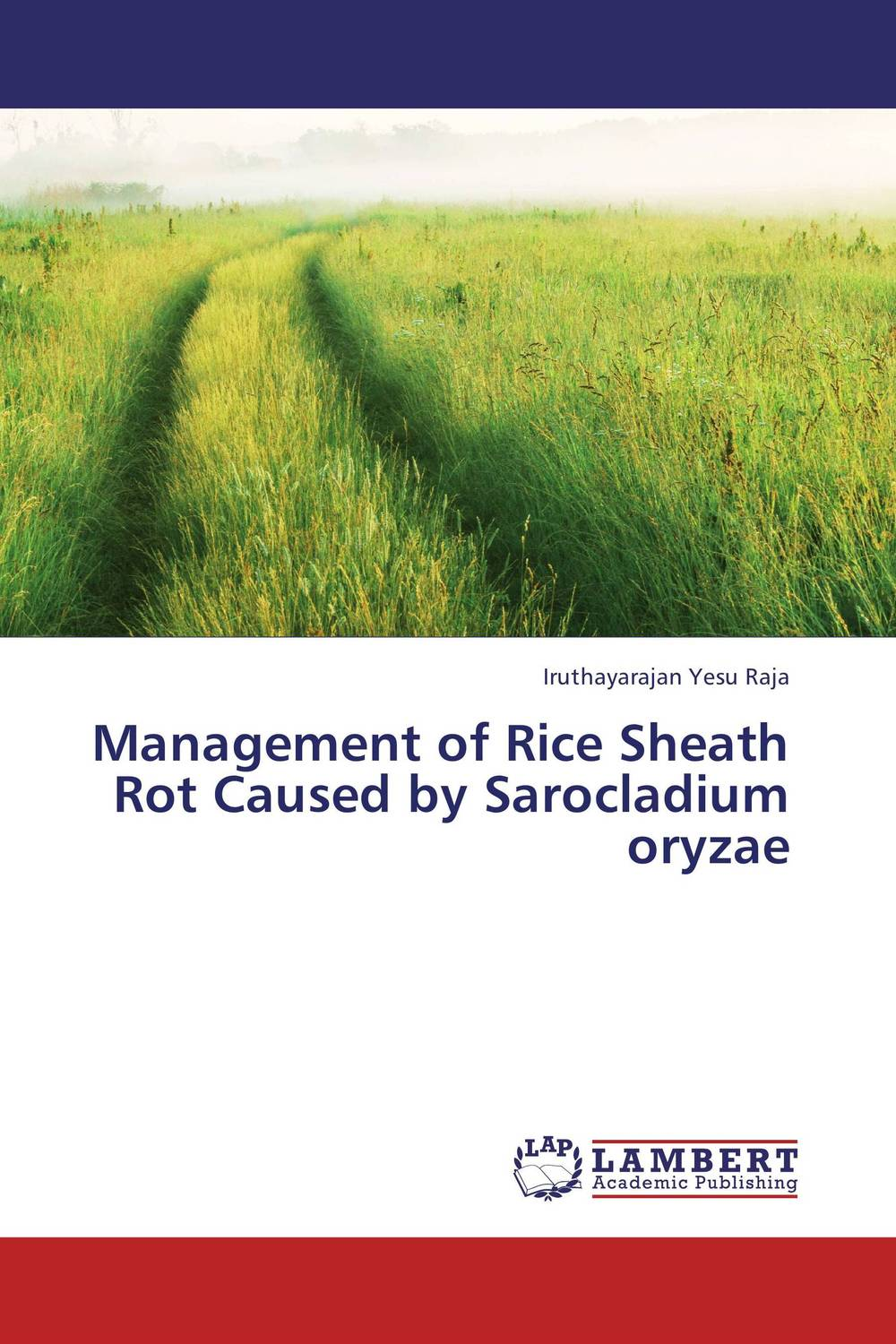 Management of Rice Sheath Rot Caused by  Sarocladium oryzae k r k naidu a v ramana and r veeraraghavaiah common vetch management in rice fallow blackgram