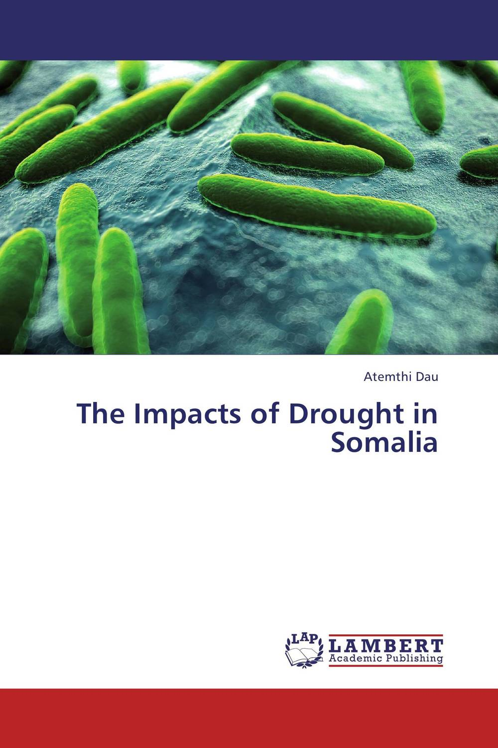 The Impacts of Drought in Somalia ngos