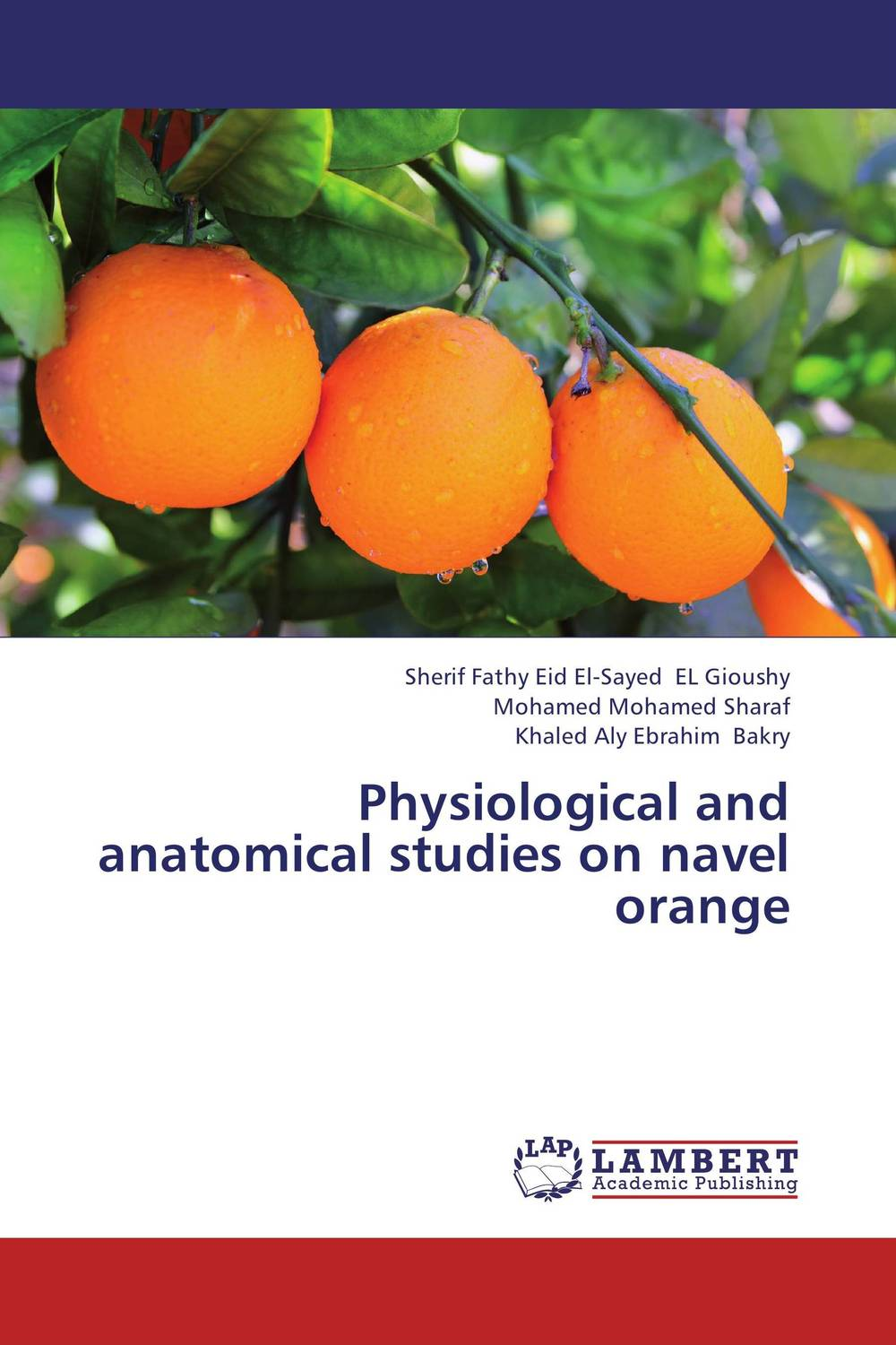 Physiological and anatomical studies on navel orange anatomical studies on species of subfamily stachyoideae lamiaceae