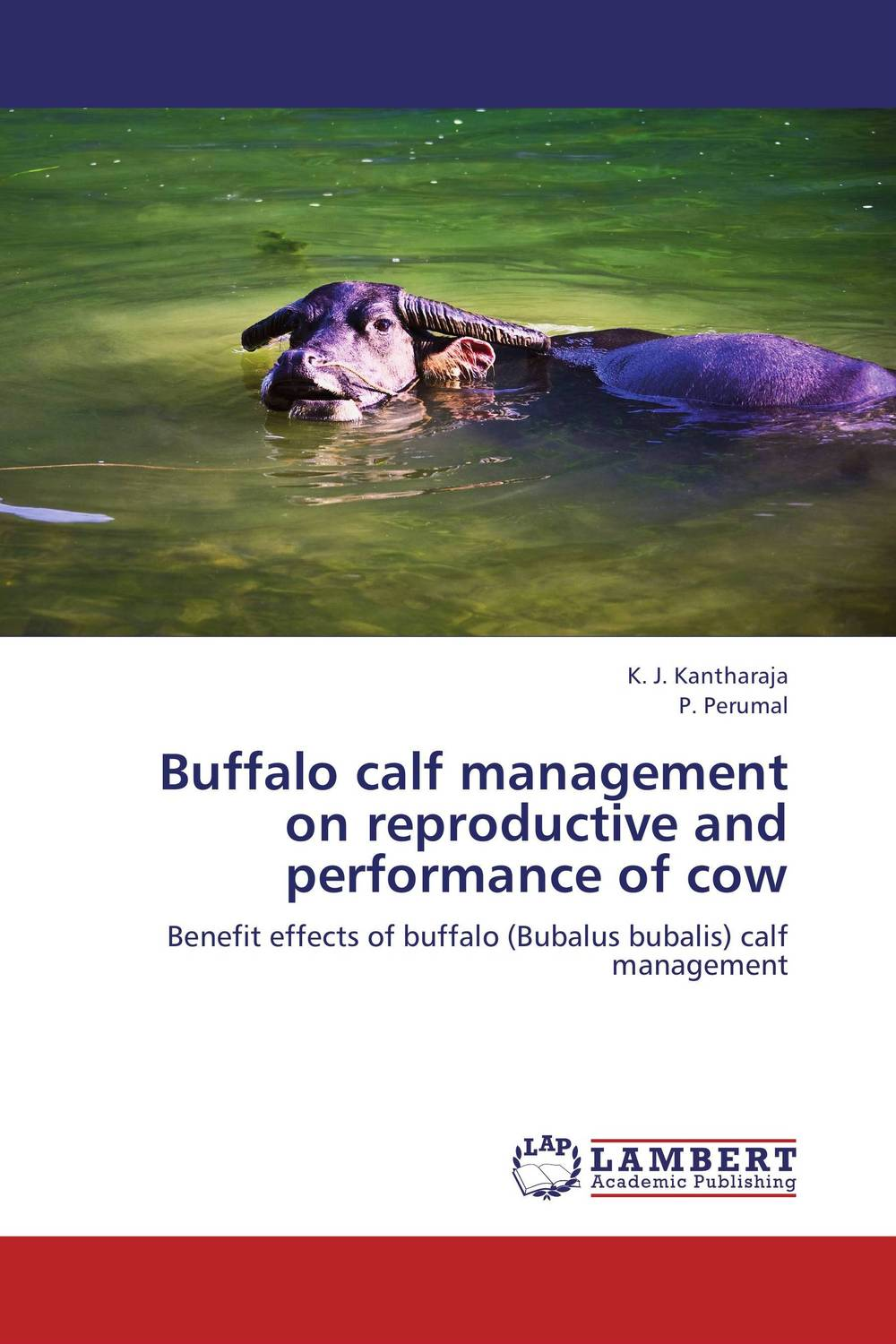 Buffalo calf management on reproductive and performance of cow кеды buffalo buffalo bu342awkga54