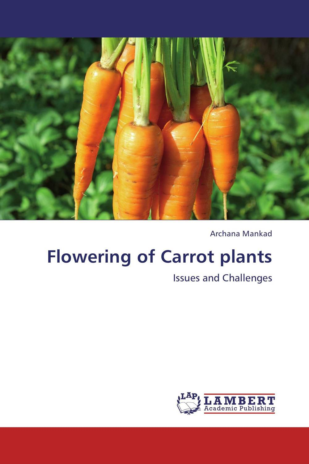 Flowering of Carrot plants favourite 1623 1w