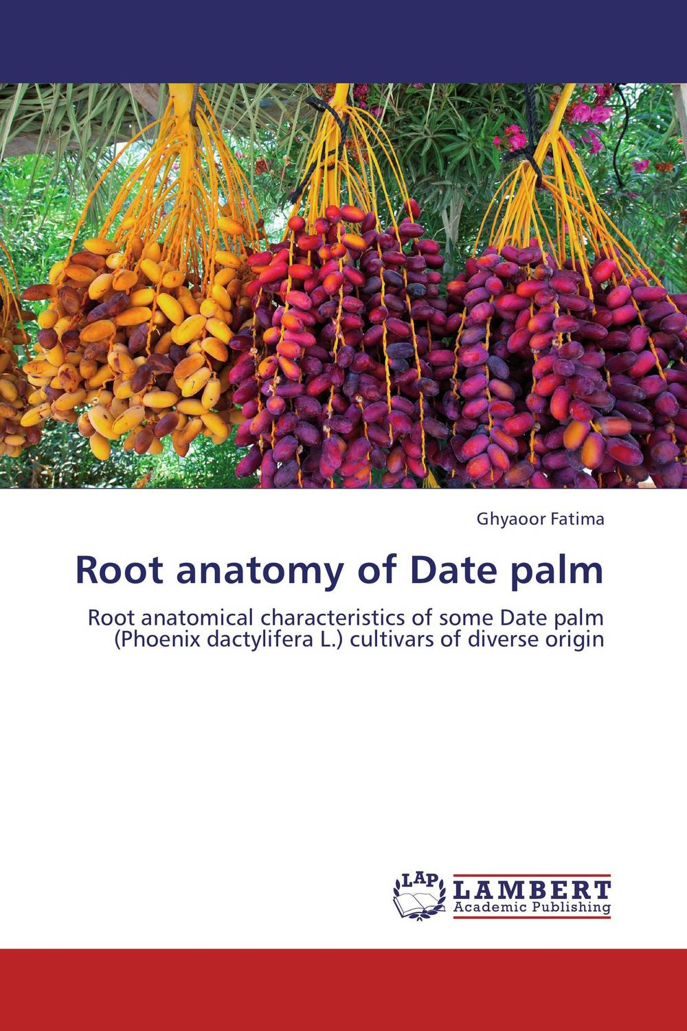 Root anatomy of Date palm anatomy of a disappearance