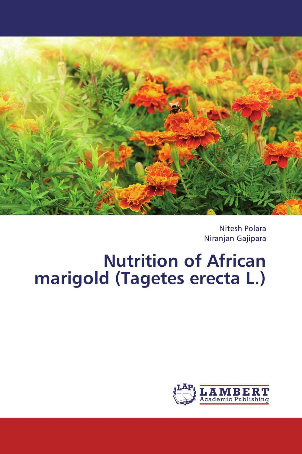 Nutrition of African marigold (Tagetes erecta L.) the best exotic marigold hotel